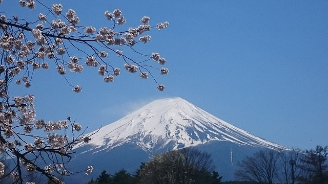 The Best Places To See Cherry Blossom In Japan